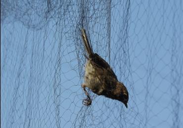 Bird Netting supplier singapore